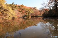 神戸市立森林植物園 Ⅴ