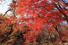 神戸市立森林植物園 Ⅱ