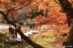 神戸市立森林植物園 Ⅳ