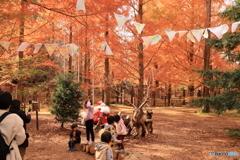 神戸市立森林植物園 Ⅰ