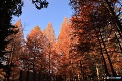 神戸市立森林植物園 Ⅶ