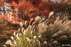 神戸市立森林植物園 Ⅷ