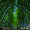 化野念仏寺の竹林
