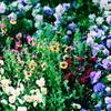 花園の世界