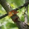 蝶と蜂と天道虫