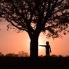 木との対話