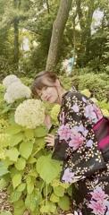 着物美人と紫陽花
