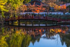 紅葉を映す蓮池