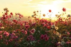 楽園の花畑