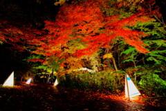 紅葉Night_2019_2
