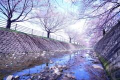 桜回廊_2020_1