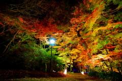 紅葉Night_2020_1