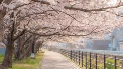 春の通り道