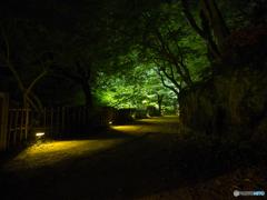 庭園からの帰り道