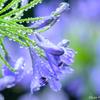Rainy Blue ~ 梅雨が明ける前に
