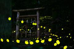 レモンの森へ