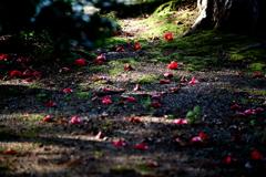 花落ちの道