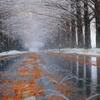 雪ふるメタセコイア並木道