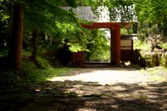 木陰の参道 2