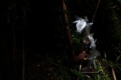 森のタツノオトシゴ?