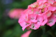 ピンクの誘い