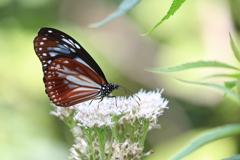 綺麗な蝶々