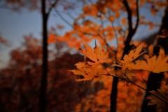 秋もあと少し・・・。