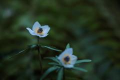 小さな花だけど