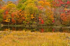 雑木紅葉の沼