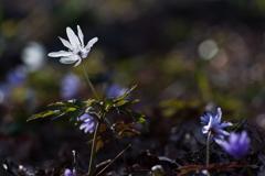 林の中にも春が来た