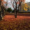 秋色絨毯の公園