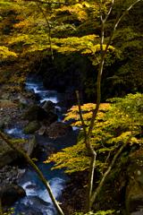 黄葉と蒼き流れ