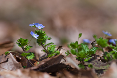 野っ原の春の始まり