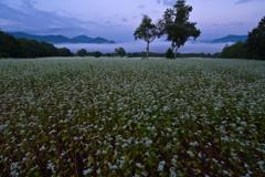 高原のそば畑の朝