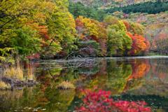 秋色溢れる水辺