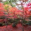 もみじ谷の紅葉 赤1
