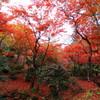 もみじ谷の紅葉 赤2