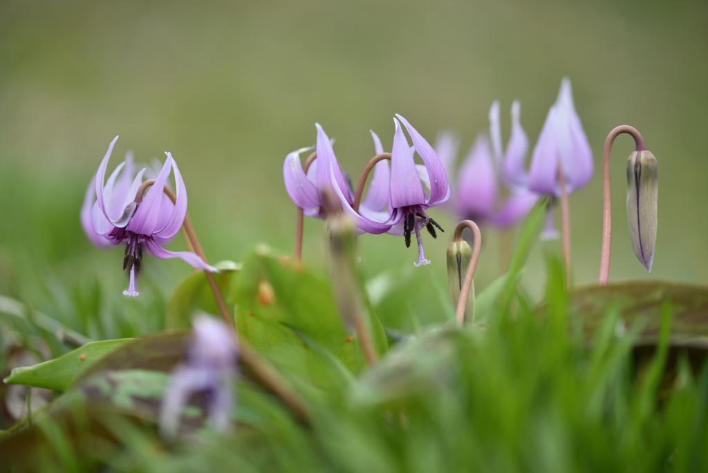 春の野に咲くⅢ
