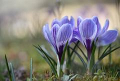 春の光りの中で