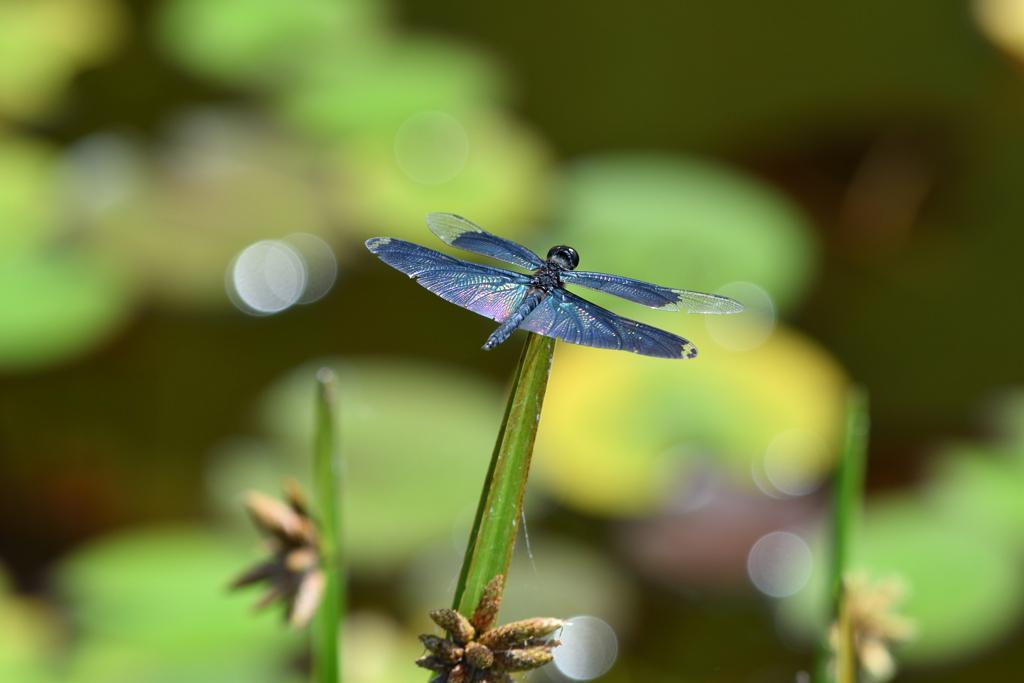 蝶蜻蛉 2020-Ⅰ