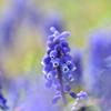 春の野に咲く