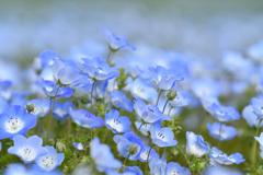 折り重なるブルー