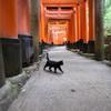 伏見稲荷大社黒猫