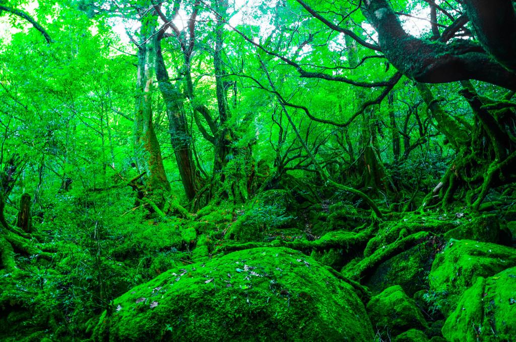 白谷雲水峡~苔むす森~