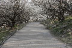 花の道(梅)