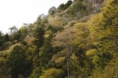 里の山景色