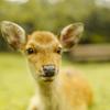 小鹿の休日