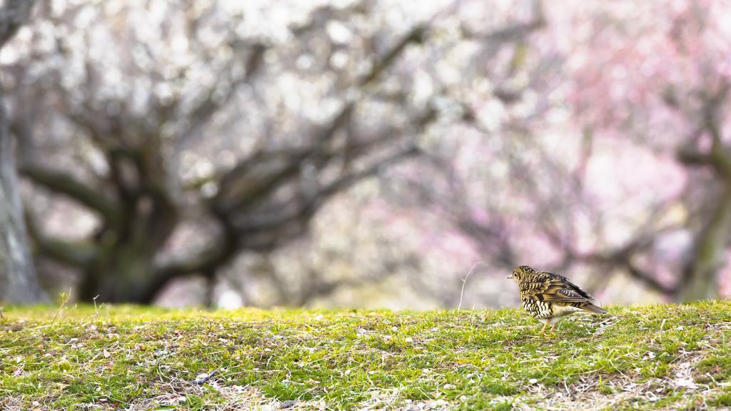 春を見つけた者
