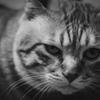 我が家のボス猫