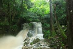 新緑と雨の滝